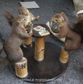 squirrels-playing-poker